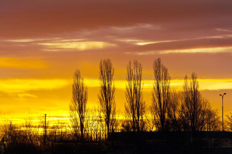 Silhouettes of the bare poplar tree alley against sunset colorful sky in the winter. Weather and climate concept royalty free stock photography
