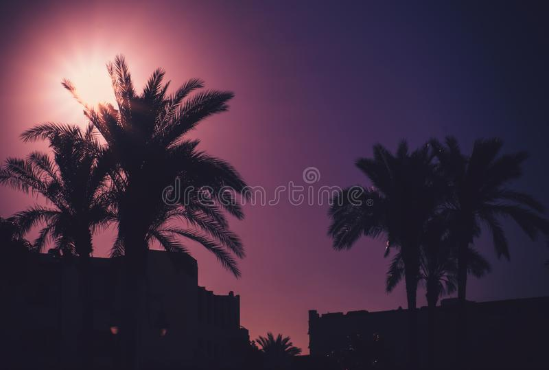 Silhouettes of beautiful palms and hotel outdoors royalty free stock image
