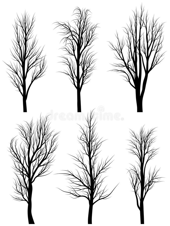 Silhouettes of birch trees without leaves. vector illustration