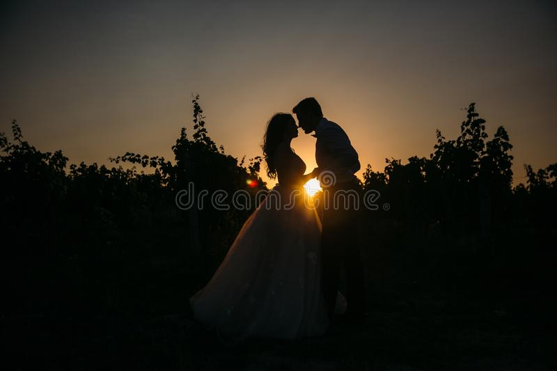 Silhouettes bride groom standing on the vineyard and tenderly looking at each other at sunset. Concept of love and. Family stock photography