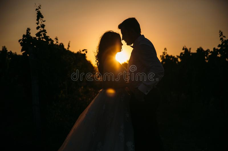 Silhouettes bride groom standing on the vineyard and tenderly looking at each other at sunset. Concept of love and. Family stock images
