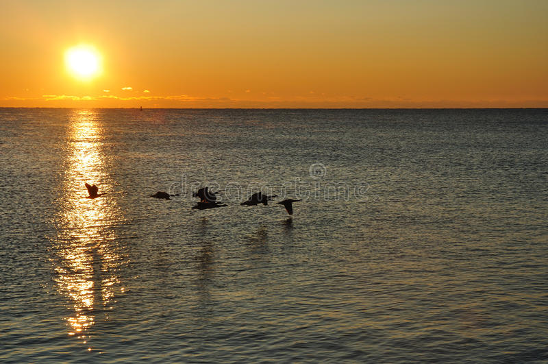 Download Silhouettes Of Canadian Geese Flying At Sunrise Stock Image - Image: 11393705