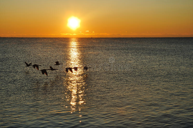 Download Silhouettes Of Canadian Geese Flying At Sunrise Stock Image - Image: 11443725
