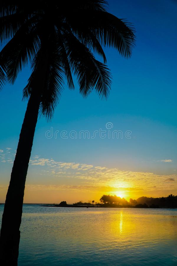 Silhouettes of Coconut trees against the sky during a tropical sunset. Scenic, thailand, wild, dawn, water, beautiful, orange, color, sunrise, tranquil, sea stock photography