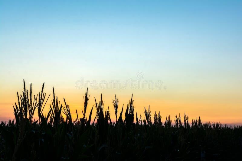 Silhouettes d'arbre avec le ciel photographie stock libre de droits