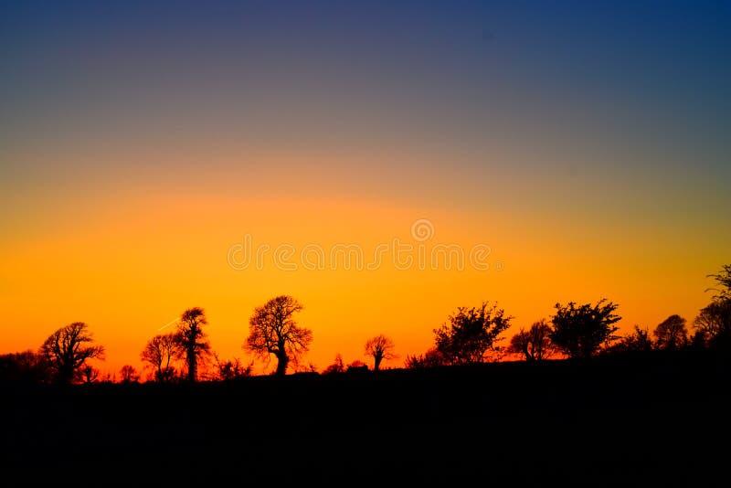 Silhouettes d'arbre dans le ciel jaune orangé photos stock