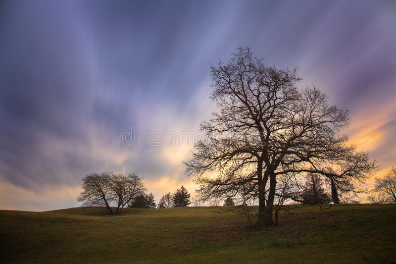 Silhouettes d'arbre et ciel de matin photos stock