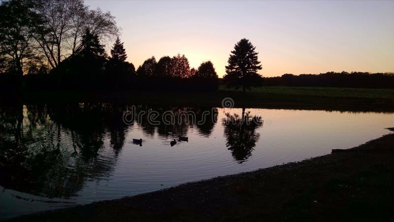 Silhouettes d'arbre, réfléchissant sur un étang, crépuscule, canards photos libres de droits