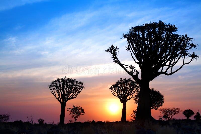 Silhouettes d'arbres de tremblement sur le fond lumineux de ciel de coucher du soleil, paysage africain magnifique dans Keetmansh photo libre de droits