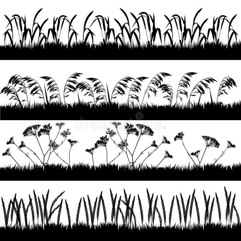 Silhouettes d'herbe avec les épillets et l'usine umbelliferous illustration stock