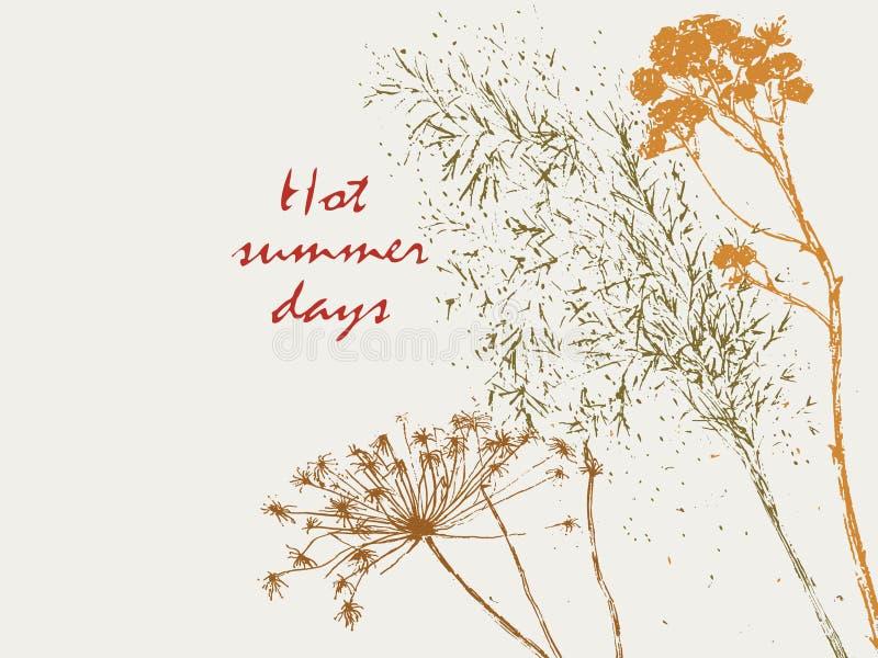 Silhouettes d'herbier d'été photos libres de droits