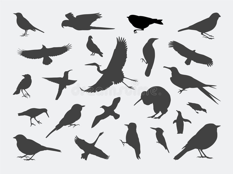 silhouettes d'oiseau illustration libre de droits