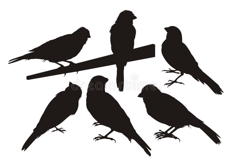 Silhouettes d'oiseau jaune canari illustration libre de droits