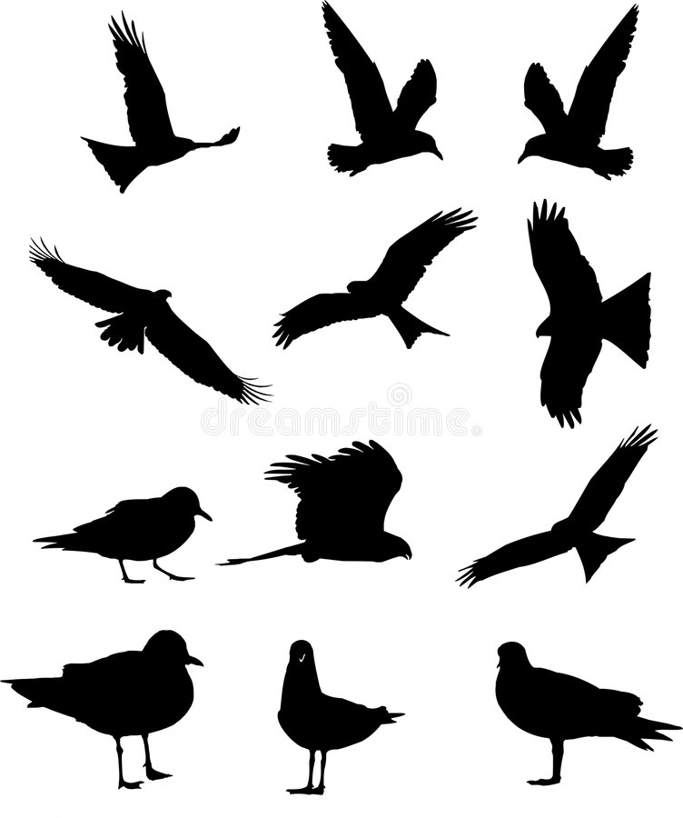 Silhouettes d'oiseaux illustration stock