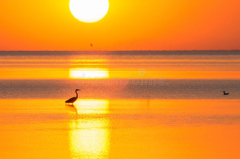 Silhouettes d'oiseaux sur l'étagère de mer à la lumière du coucher de soleil photo stock
