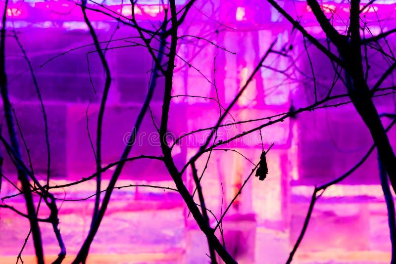Silhouettes de branche d'arbre devant la lumière pourpre photographie stock