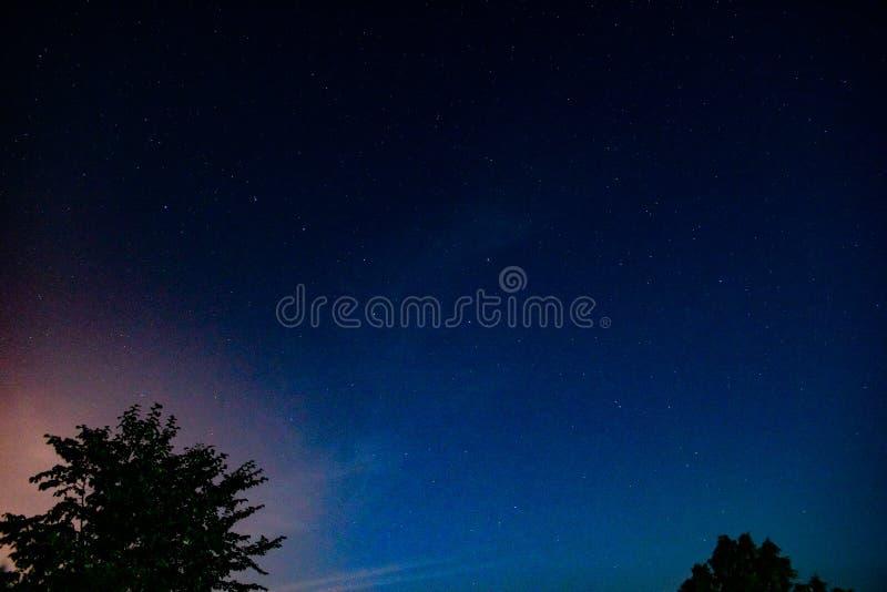 Silhouettes de ciel nocturne et d'arbre photographie stock libre de droits