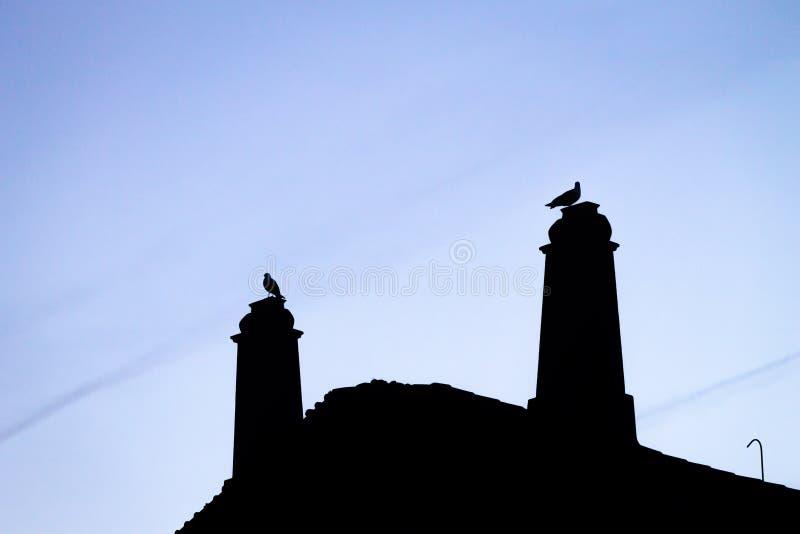 Silhouettes de dessus de toit et de mouettes photo stock