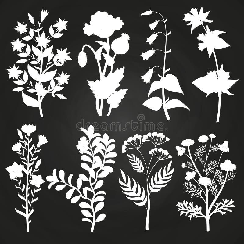 Silhouettes de fines herbes et florales blanches sur le tableau illustration stock