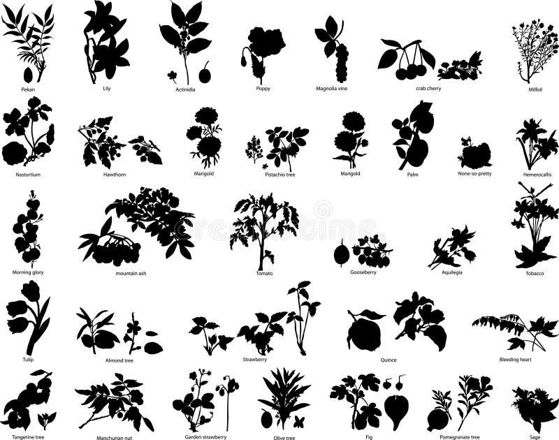 silhouettes de fleurs de baies illustration stock