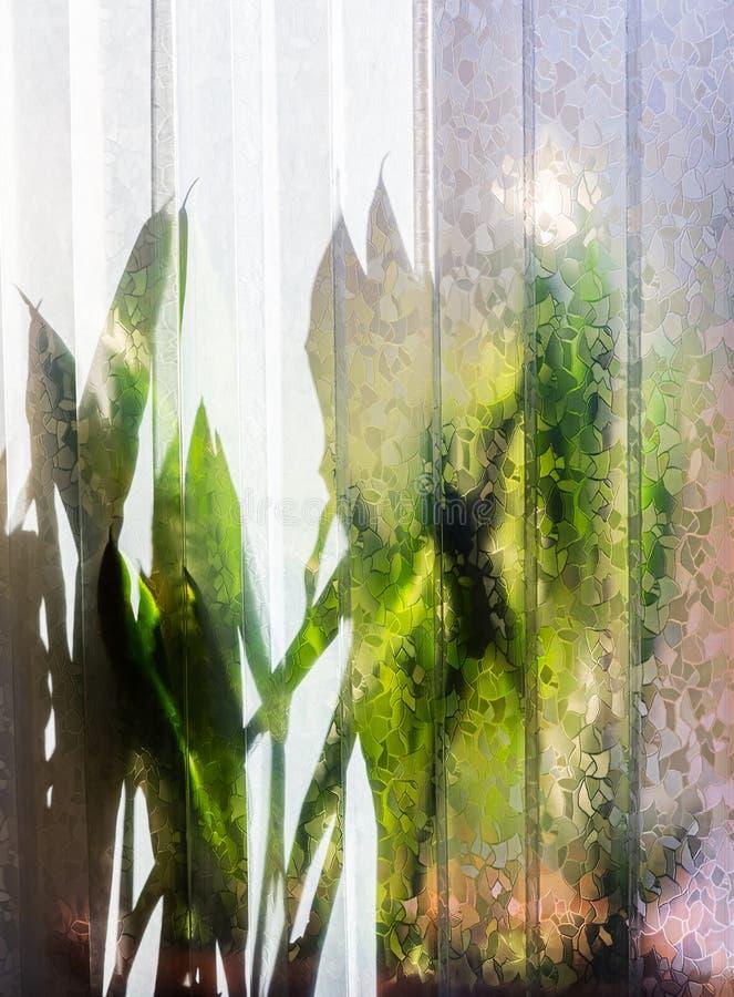 Silhouettes de fleurs derrière un rideau de plastique photographie stock libre de droits