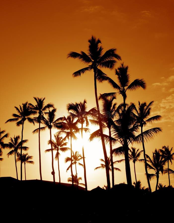 Silhouettes de palmier de noix de coco photos libres de droits