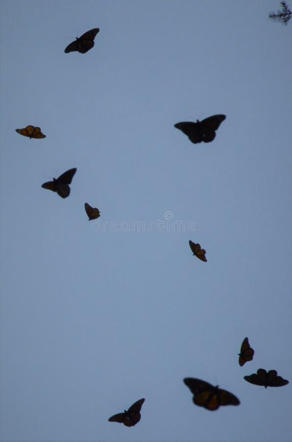 Silhouettes de papillon de monarque au Mexique photographie stock