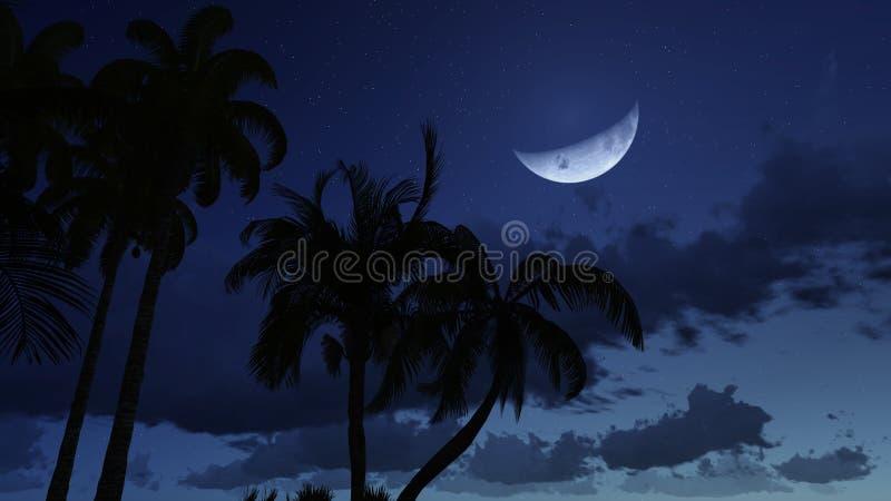 Silhouettes de paume contre le ciel nuageux de nuit image libre de droits