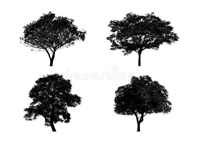 silhouettes den svarta illustrationen f?r bakgrund treevektorwhite royaltyfria bilder