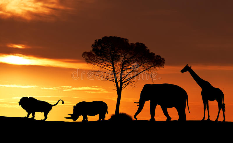Silhouettes des animaux africains au coucher du soleil dans la savane photo stock