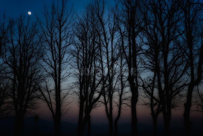 Silhouettes des arbres illustration stock