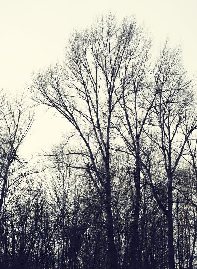 Silhouettes des arbres nus d'automne images libres de droits