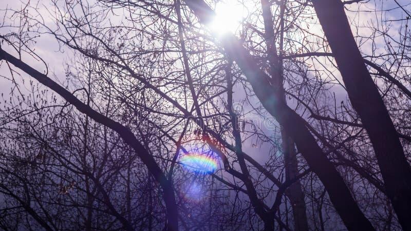 Silhouettes des branches et des troncs d'arbre en forêt, parc contre le ciel et nuages Éclat de Sun, rayon de lumière, lumière du photographie stock