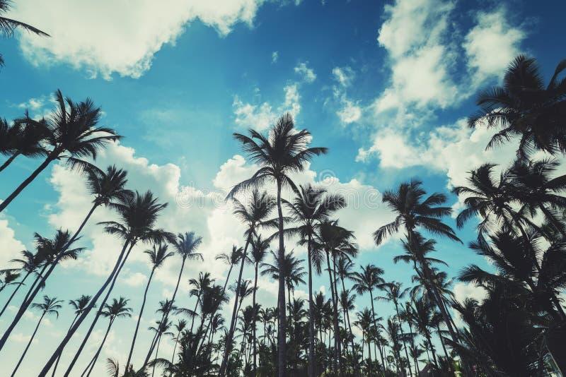 Silhouettes des palmiers contre le ciel avec des nuages Plage de Punta Cana photo stock