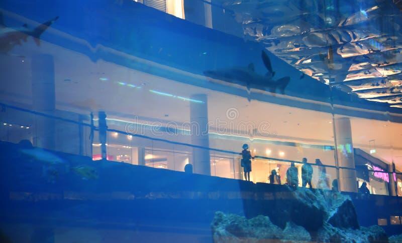 Silhouettes des personnes à l'arrière-plan du grand aquarium images stock