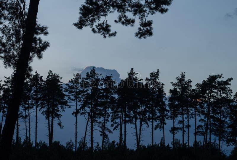 Silhouettes des pins dans la perspective d'un ciel bleu de soirée Soirée dans la forêt de pin images libres de droits