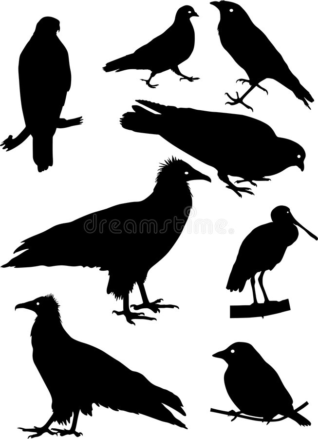 Silhouettes of different birds stock illustration