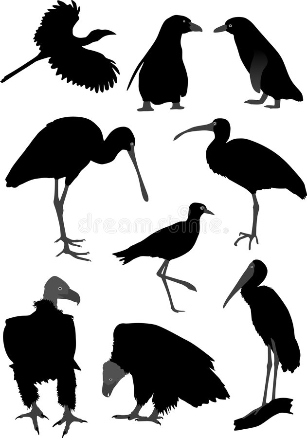 Silhouettes of different birds royalty free illustration