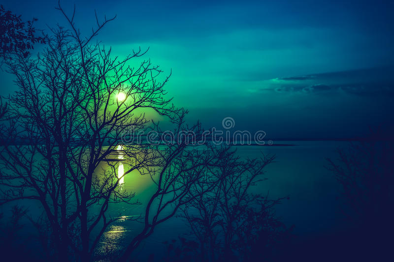 Silhouettes of dry tree against sky and cloud over tranquil sea. Nighttime with moonlight and reflection in water. Full moon behind trees, beautiful nature in royalty free stock image