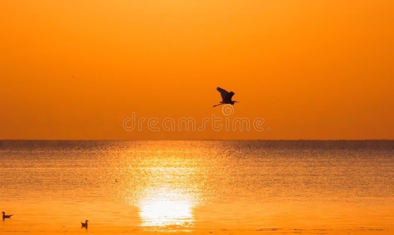 Silhouettes du héron et des mouettes montants au-dessus de la mer sur le fond du coucher de soleil photo libre de droits