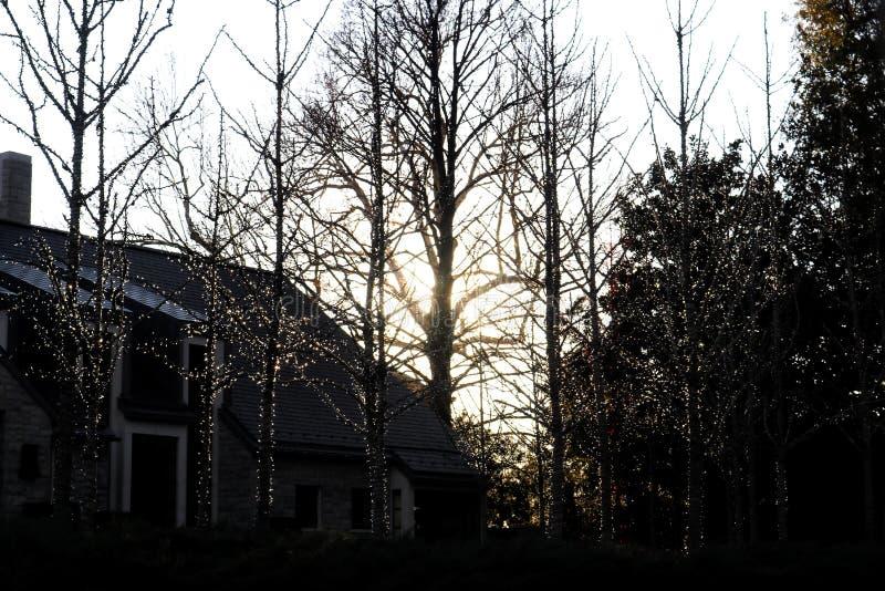Silhouettes du petit extérieur d'arbres ficelé avec des lumières de Noël contre une maison foncée et de plus grands arbres au cré image stock