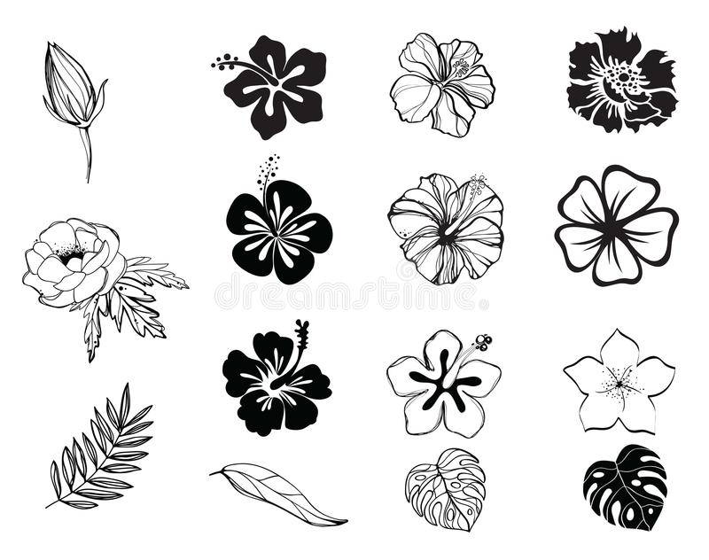 Silhouettes of flowers black and white isolated royalty free illustration