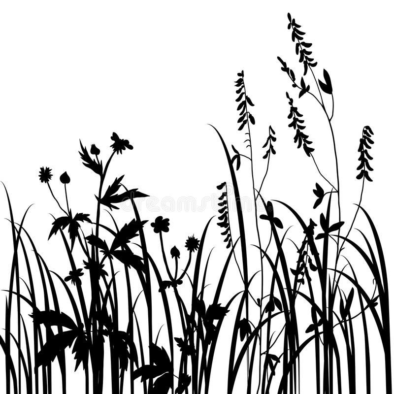 Black Flower Silhouette Stock Vector Illustration Of: Silhouettes Of Flowers And Grass Stock Photo