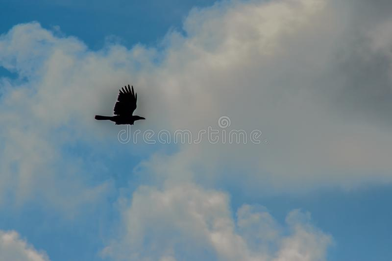 Silhouettes of flying bird under blue sky background. Bird Flying in the Middle on the Air Under Clear Blue Sky during Daytime stock photos