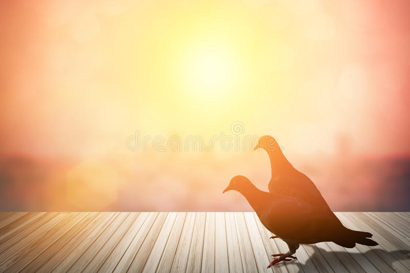 Silhouettes of flying dove in red glowing sunset sky.doves in l royalty free stock images