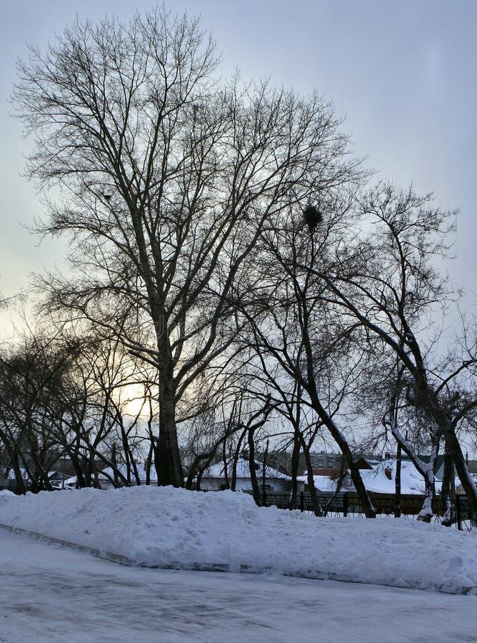 Silhouettes foncées des arbres contre le ciel de soirée d'hiver image stock