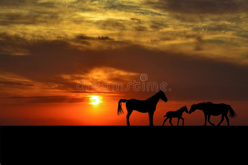 Silhouettes of horse family at sunset stock photo
