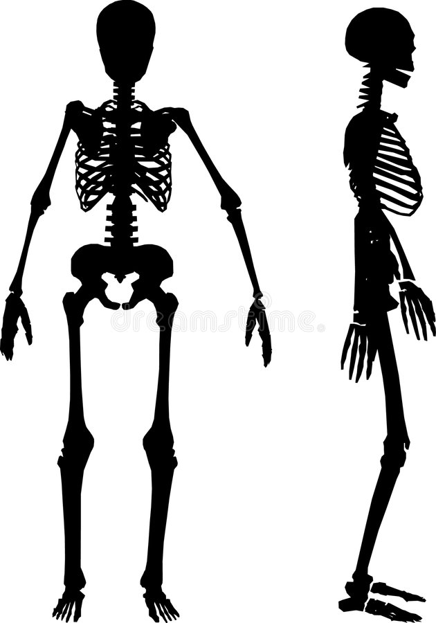 Silhouettes Of Human Skeleton Stock Vector - Illustration of person ...