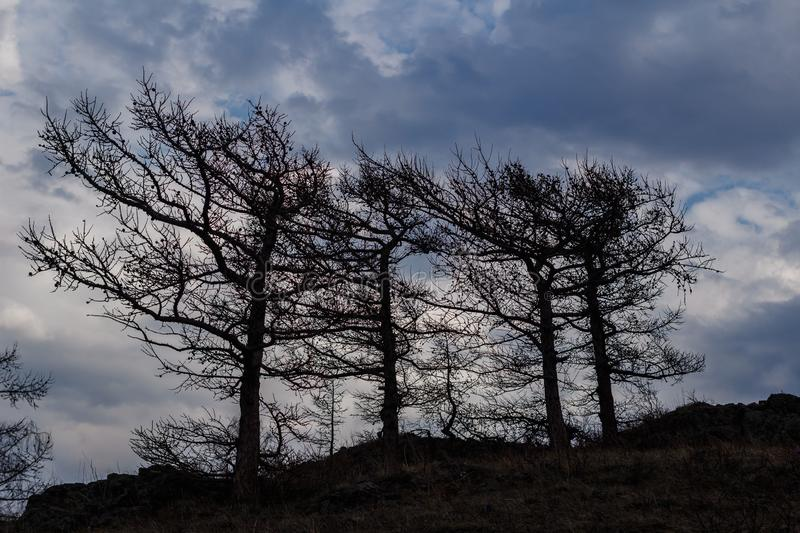 Silhouettes of large trees against the sky royalty free stock photography