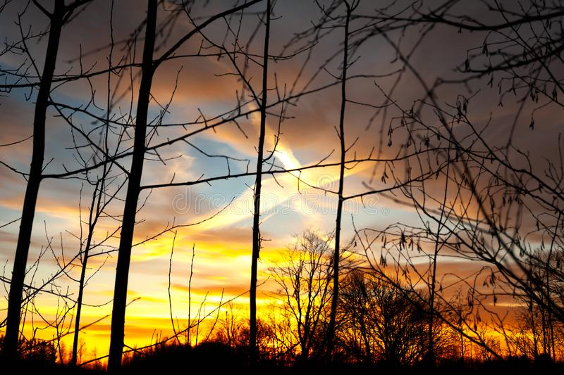 Silhouettes of a leafless tree branches on colorful sunset and cloudy blue sky with plane trail as a backgrond. Autumn in Finland stock photo